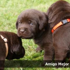 amigo2