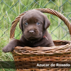 azucar3