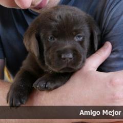 amigo4week