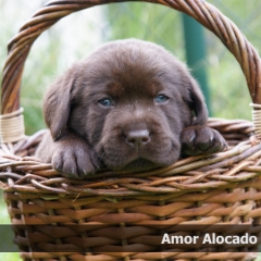 amor4week