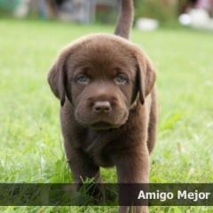 amigo5week_0