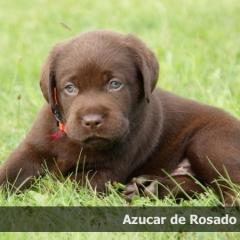 azucar5week_0
